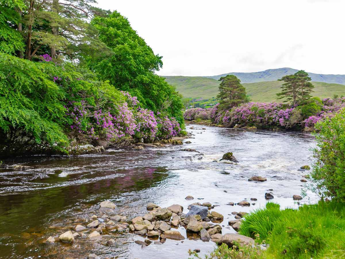Irish Scenery, River