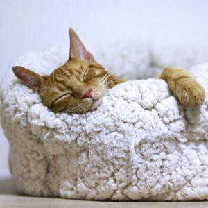 Kitty sleeping peacefully