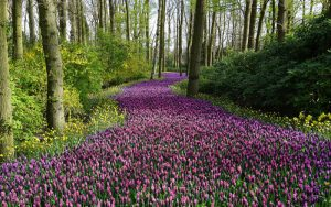 Spring Ahead, Road of Flowers
